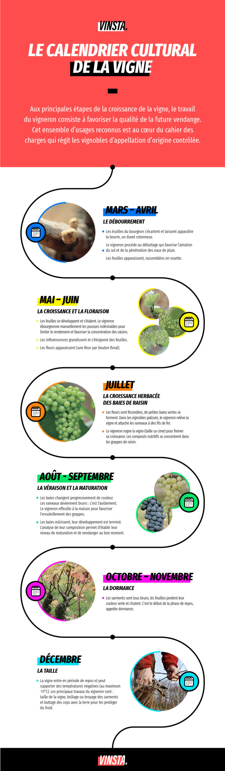 infographie cycle vigne