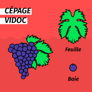 cepage-resistant-vidoc