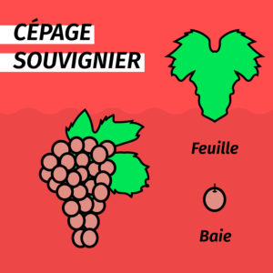 cepage-resistant-souvignier