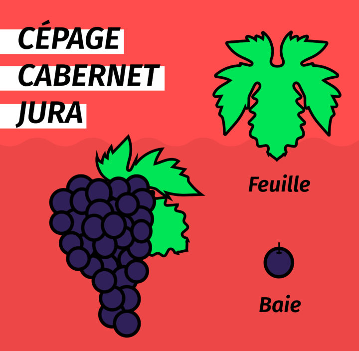 POSTS_VINSTA_AVRIL_CEP_CABERNET_JURA